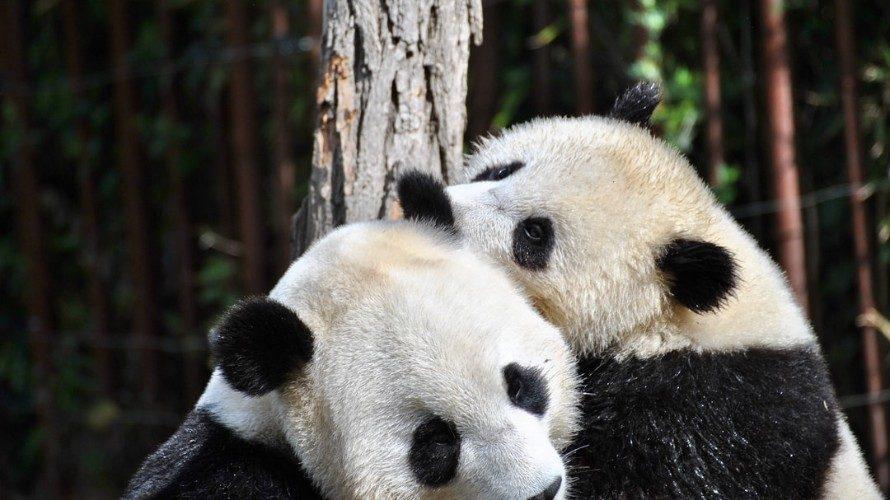 pandas – DataFrame を結合する pandas.merge の使い方